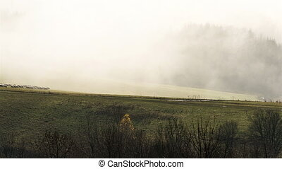 Sheep feeding pasture in autumn mist morning time lapse -...