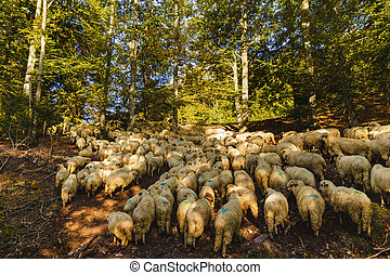 sheep flock in the forest