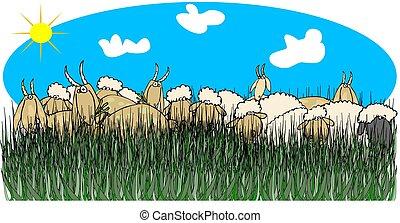 Sheep & goats in tall grass