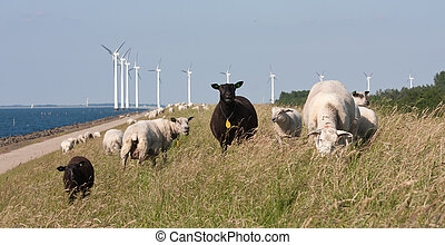 Sheep grazing at the dike with behind them a long row of windmills in the sea