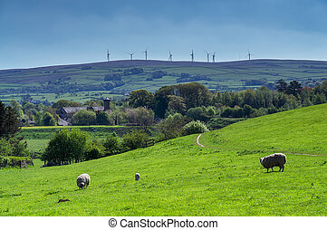 Sheep grazing in a field with wind turbines on the horizon.