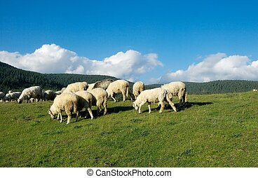 Sheep grazing in a mountain landscape