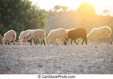 Sheep grazing in the mountains.