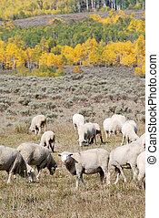 Sheep Grazing in the Mountains