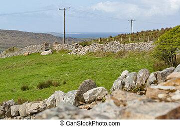 sheep in Connemara