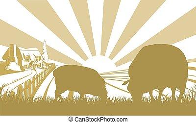 Sheep in farm field scene