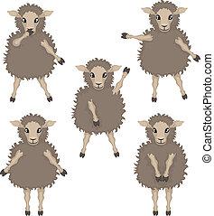 sheep in various poses