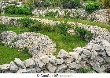 sheep, isla, drystone, paredes, rudine, krk, croacia, pasto