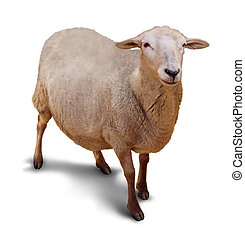 Sheep Isolated - Sheep on a white background with a shadow...