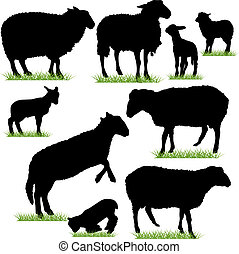 sheep, jagnięta, komplet, sylwetka