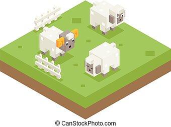 sheep, lägenhet, isometric, äng, symbol, bagge, illustration, fält, vektor, design, bakgrund, ikon, 3
