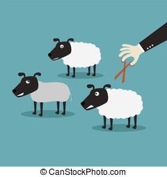 sheep, lana, corte