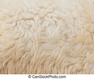 sheep, lana, primer plano, textured