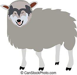 sheep, lobo, concepto, ropa