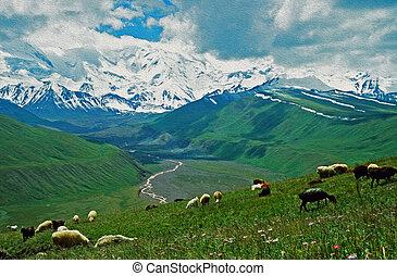 sheep, montanhas, óleo, Nuvens, semelhante, Espetacular, primeiro plano, foto, Pastar,  kyrgystan,  stylized,  steppe, fundo,  alay, filtrado, quadro, vale,  pamyr, olhar