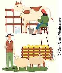 sheep, mulher, vaca, pessoas, agricultura, homem