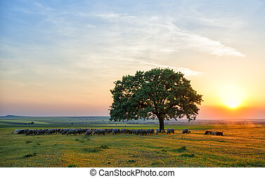 sheep near an oak in the sunset