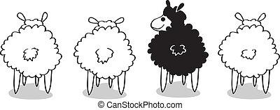 sheep, negro