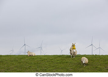 sheep on green grassy dike and wind turbines in the...