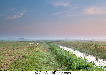 sheep on pasture by river at sunrise