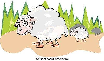 Sheep or Ovis aries, illustration
