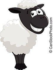 sheep, proposta, cartone animato