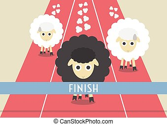 sheep race - competition of sheep. the most powerful black...