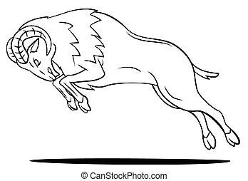 sheep, ram