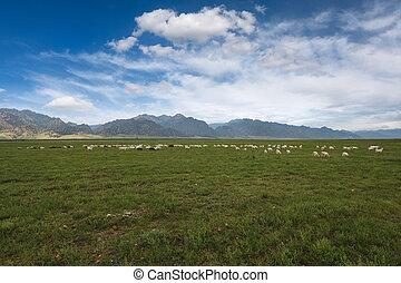 sheep, rebanho, ligado, gramado, sob, a, céu azul