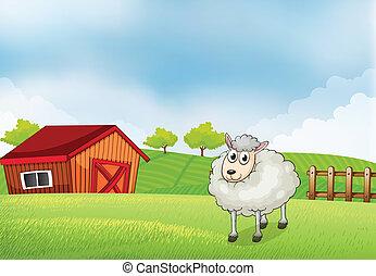 sheep, recinto, fattoria, indietro, legno, granaio