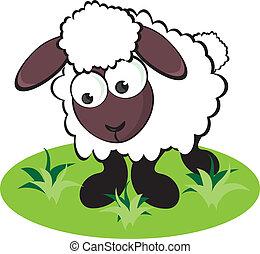 sheep, rysunek