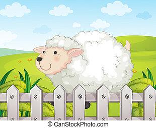 sheep, sorrindo