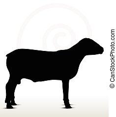 sheep, stanie poza, sylwetka, wciąż