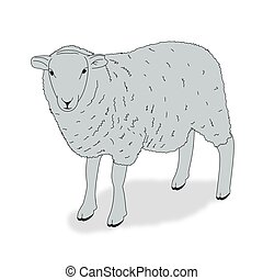 Sheep - Illustration of a sheep on a white background