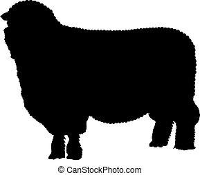 sheep, sylwetka