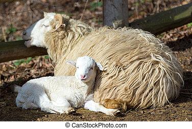 sheep, symbol, påsk, lamm
