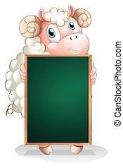 sheep, tímido, vazio, segurando, quadro-negro