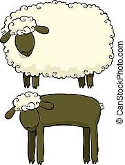 sheep, to