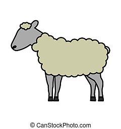 sheep, vita selvaggia, cartone animato, animale