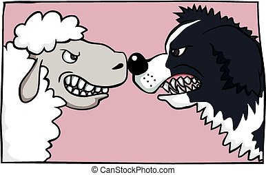 A face off between a border collie and a sheep.