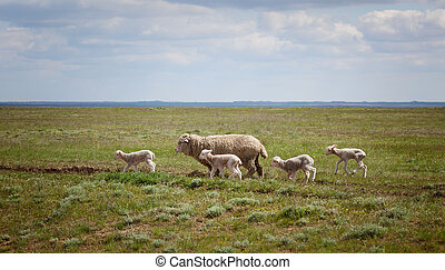 Sheep with lambs on the field