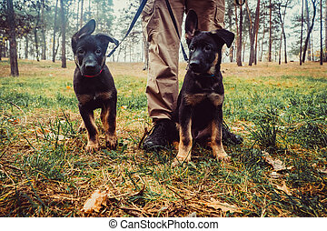 Sheepdog puppies on a leash
