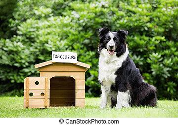 Sheepdog standing beside dog house