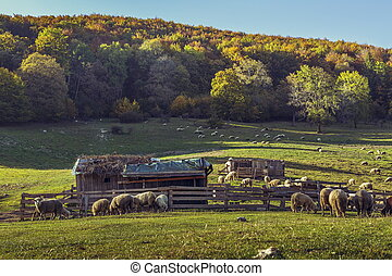Autumn landscape with sheepfold and grazing sheep flock on a mountain meadow in Brasov county, Romania.