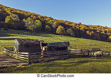 Sheepfold and grazing sheep flock - Autumn scenery with ...