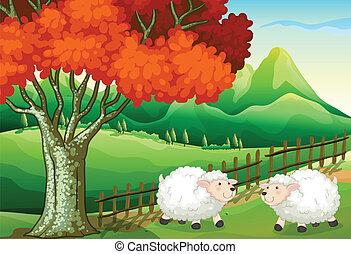 sheeps, albero, due, sotto