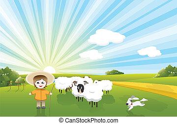 sheeps, cane