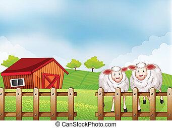 sheeps, dentro, a, cerca madeira, com, um, celeiro