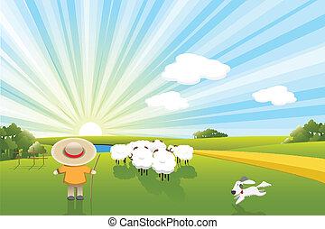 sheeps, dog