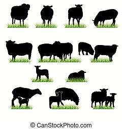 sheeps, ensemble, silhouettes